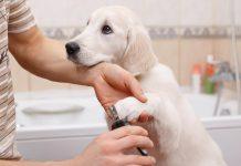 sečenje noktiju psu